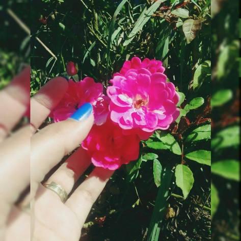 Flores - a beleza de um jardim!